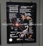 Aluminum fissato al muro Magnetic Frames per Posters su Pillar