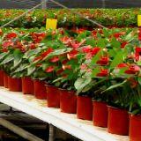 Preiswerter runder Plastikblumen-Potenziometer für Gewächshaus