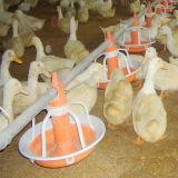 Riga d'alimentazione automatica per il pollo da carne