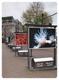 El panel compuesto de aluminio para hacer publicidad de Hm6814