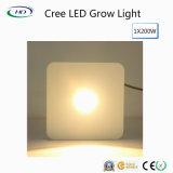 I chip LED del CREE coltivano i chip chiari del CREE per le piante mediche
