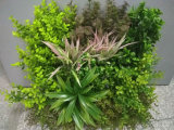 Декоративные заводы травы стены рамки вися