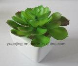 Planta y flor artificiales Sinocrassula del nuevo estilo Indica