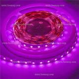 IP65 Waterproof o brilho super da iluminação de tira de 5050 diodos emissores de luz com o UL alistado