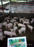 Amélioration d'évolution de bétail et de volaille d'Unigrow