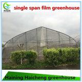 경제 식물성 플레스틱 필름 녹색 집