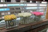 2017 مصنع أكريليكيّ زهرة صندوق أكريليكيّ زهرة حامل قفص [أل-20]