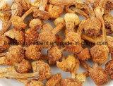 Естественное 20%--Порошок Blazei Muril Agaricus полисахаридов 50%, выдержка Blazei Agaricus