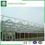 Landwirtschafts-multi Überspannung PC Blatt-/Polycarbonate-Gewächshäuser für Pflanzen