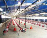 La casa de pollo de acero/las aves de corral de acero vertió con los equipos (PCH-18)