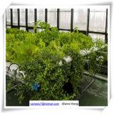 버섯 천막 정원 온실