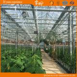 De Serre van het glas voor het Planten van Komkommer/Tomaten
