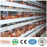 Клетка слоя батареи машинного оборудования фермы автоматического цыпленка Breeding
