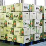 Ранг AA стерженей семян тыквы кожи Shine от Иннер Монголиа Китая