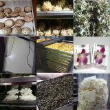 Lyophilizer 500kg do alimento por o grupo