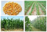Planteur manuel de maïs de poussée de main pour des graines/engrais