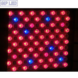 GIP Full Spectrum 600W LED Grow Light für Plant Growing