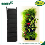 Plantador vivo vertical decorativo de la pared de Onlylife