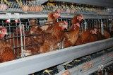Equipo de las aves de corral con la casa prefabricada para una parada de la fábrica