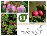 Extrato da folha da uva-ursina bom para Tranquilizing