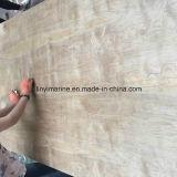 Contre-plaqué de bouleau blanc pour la pente des meubles 18mm C/D