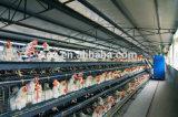 Pollo che eleva la Camera di gallina della gabbia della Camera