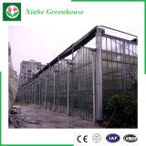 Chambre verte en verre d'envergure multi d'agriculture pour des légumes