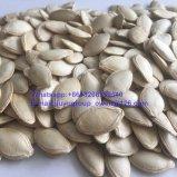 新しい穀物の輝やきの皮のカボチャシード