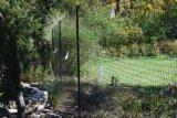 Олени ограждают для садов