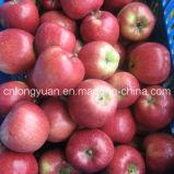 Buona qualità Apple rosso fresco, Apple red delicious cinese