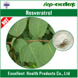 Extrato gigante natural Resveratrol de Knotweed