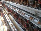 ISO9001를 가진 자동적인 층 닭 감금소 장비 (A 프레임)