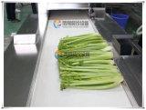 Gd-586 Machine de découpage de légumes à feuilles