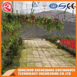다중 경간 꽃 식물성 강화 유리 녹색 집