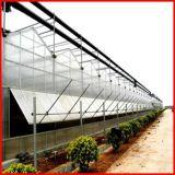 Agricultura de China Multi-Span policarbonato Hoja de efecto invernadero para Hortalizas