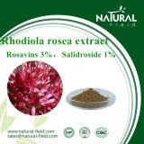 Rhodiola Rosea extracto en polvo Rosavin
