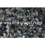 2-2.5cmの最上質の乾燥した白の背部菌類