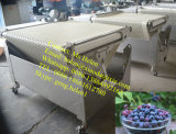 Automatic Cherry Potato Sorting Machine / Blueberry Grading Line