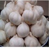Кожа китайского нового чеснока урожая красная, красный чеснок