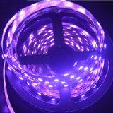 Indicatore luminoso di striscia di SMD5050 RGBW LED Strip/LED/striscia flessibile del LED