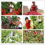 Lavorazione organica di Fertilizer/NPK Fertilizer per agricoltura