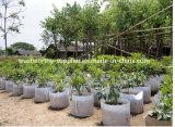 El invernadero crece el bolso, bolso del plantación de árboles