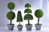 Decoración al aire libre de la venta de los árboles calientes del Topiary con clases de estilo