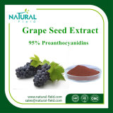95% Proanthocyanidin Puder-Trauben-Startwert- für Zufallsgeneratorauszug-Pflanzenauszug