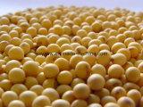 大豆のイソフラボンの大豆のエキスの粉