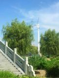 낮은 Price Wind Generator Turbine 10kw