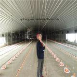 Automatisiertes Geflügelfarm-Gerät für Bratrost-Produktion
