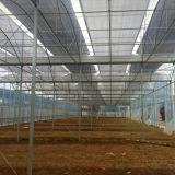 토마토 오이 식물성 성장하고 있는을%s Multispan 플레스틱 필름 온실
