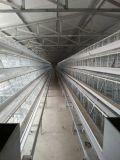 Système de cage de poulet de Qingdao, Chine