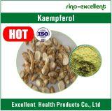 Pó natural do Kaempferol da alta qualidade